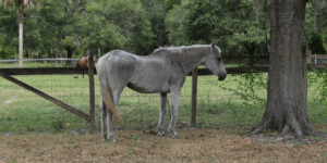 A rescue horse at Nala's New Life Rescue